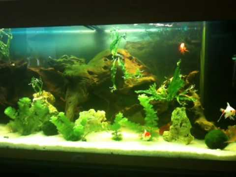 rio 180 juwel aquarium poissons japonais 2.MOV - YouTube Decor Japonais on