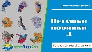 Новинки 4 - Бойцовые рыбки петушки (betta) халф мун (луна), корона и кои