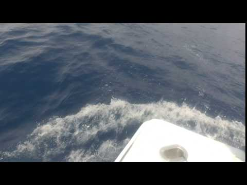 2017 Offshore World Championship | Savannah Sport Fishing Club Bluewater | Blue Marlin