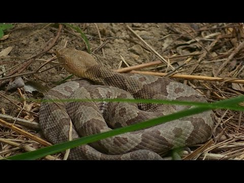 Snakes Abound at Mammoth Cave National Park