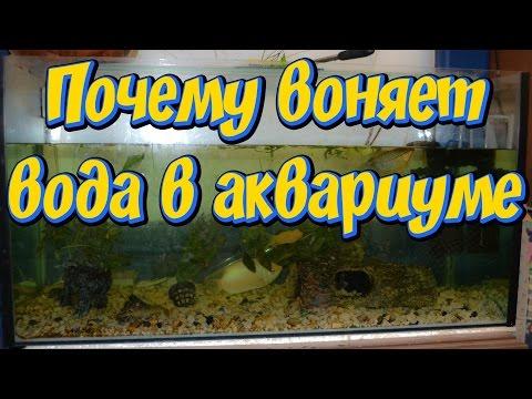 Как убрать запах из аквариума с рыбками в домашних условиях