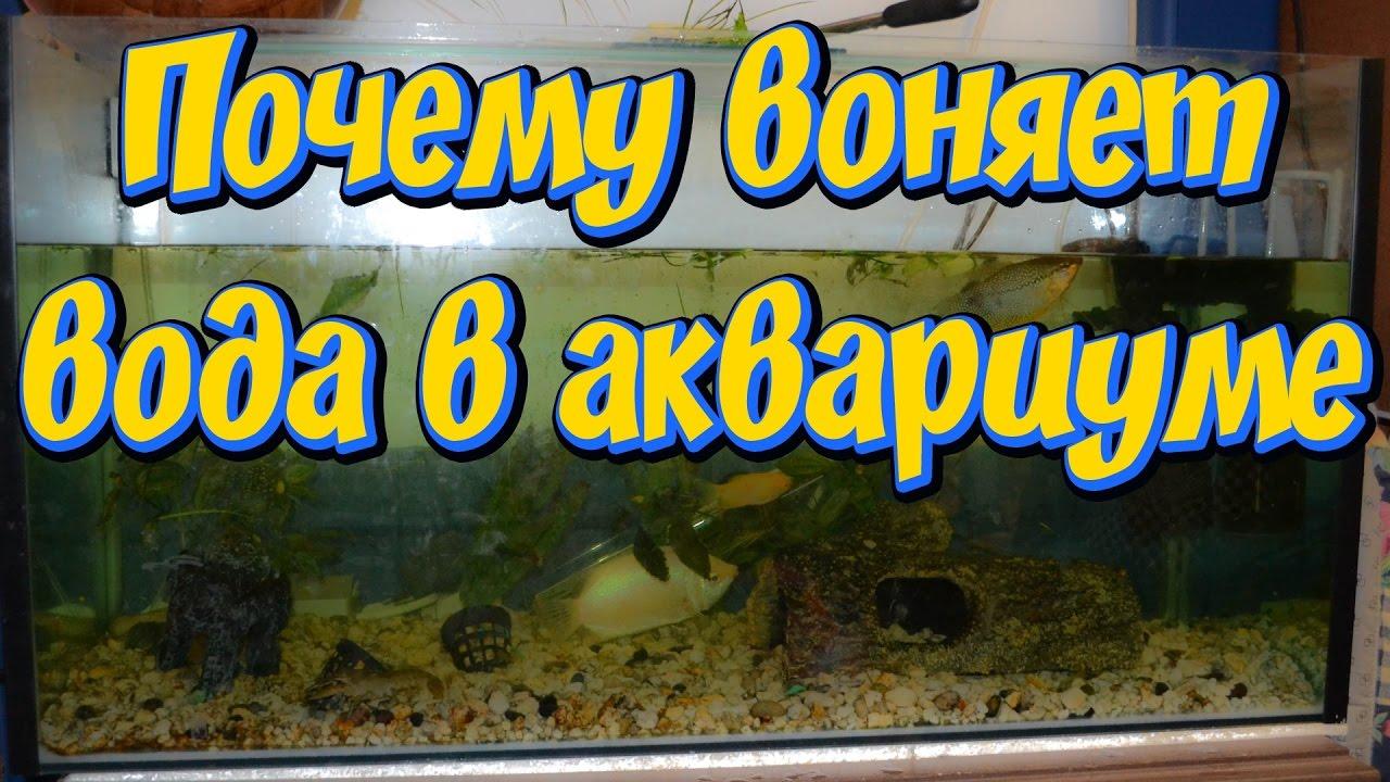 Почему воняет вода в аквариуме! Причины по которым портится вода в аквариуме!