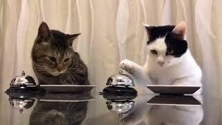 самые умные кошки в мире хотят есть