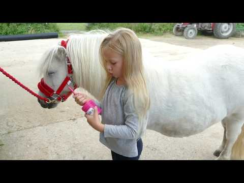 How To Groom And Look After Your Shetland Pony Tutorial With Harlow White Age 5