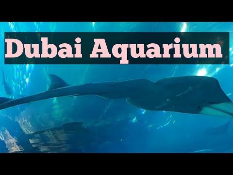 The Dubai Aquarium and Underwater Zoo