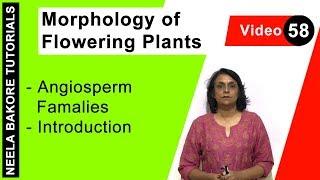 Morphology of Flowering Plants - Angiosperm Famalies   Introduction