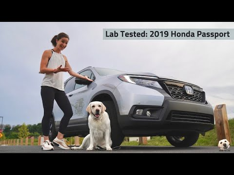 2019 Honda Passport: Andie the Lab Review!