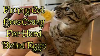 Funny Cat Goes Crazy For Hard Boiled Eggs/Funny Cat Video