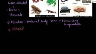 Temparature Classification of Animals