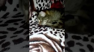"""Мой кот """" рыбий жир"""