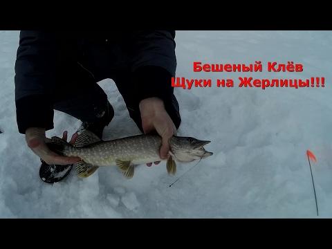 видео ловля крупной щуки на жерлицы