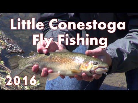Fly Fishing Little Conestoga Creek 2016