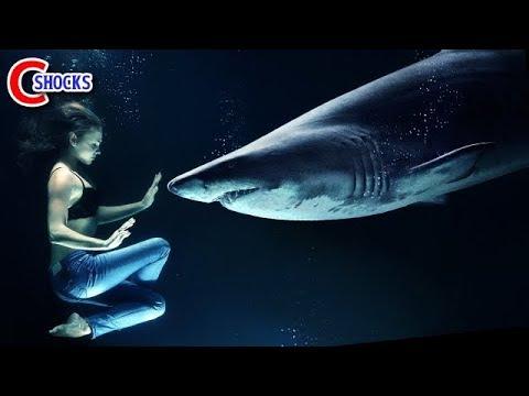 【衝撃】実際に起きた悲惨すぎるサメ被害4選!