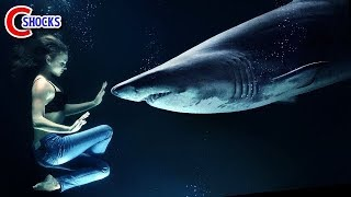 【衝撃】実際に起きた悲惨すぎるサメ被害4選! thumbnail