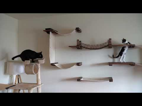 Two Blind Cats Playing on Wall Furniture