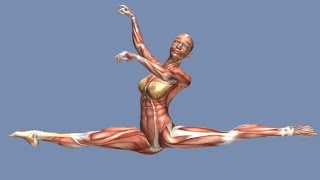 How to Grand Jete Muscle Anatomy Training Program EasyFlexibility