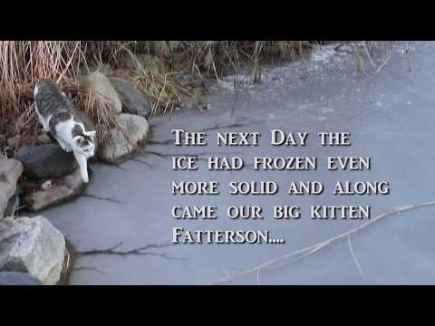 Ice Skating Cats! Cats on Ice by Suburban Wildlife Control - cute kitties!