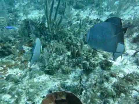 scuba diving with conch republic in tavernier florida near key largo