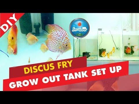 DISCUS FISH FRY GROW OUT TANK SETUP || FISH BABIES TANK