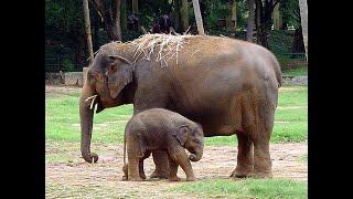 منوعات الآن | صغير الفيل النادر يظهر بهجته في حديقة الحيوانات بالمكسيك