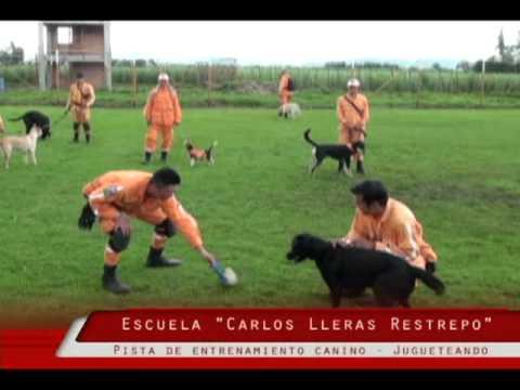 Escuela Internacional Carlos Lleras Restrepo - Instrucción Canina