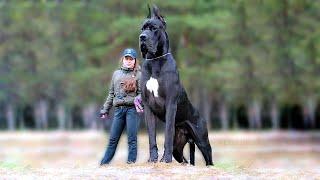 सबसे खूंखार कुत्ते जिनसे शेर चीते भी डरते है ।। TOP 7 MOST DANGEROUS DOGS