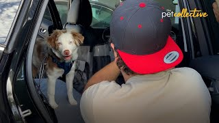 Car Safety Gear for Dogs