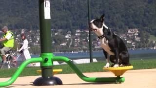 Clicker Training Dog Games