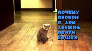 Почему первой в дом должна войти кошка?