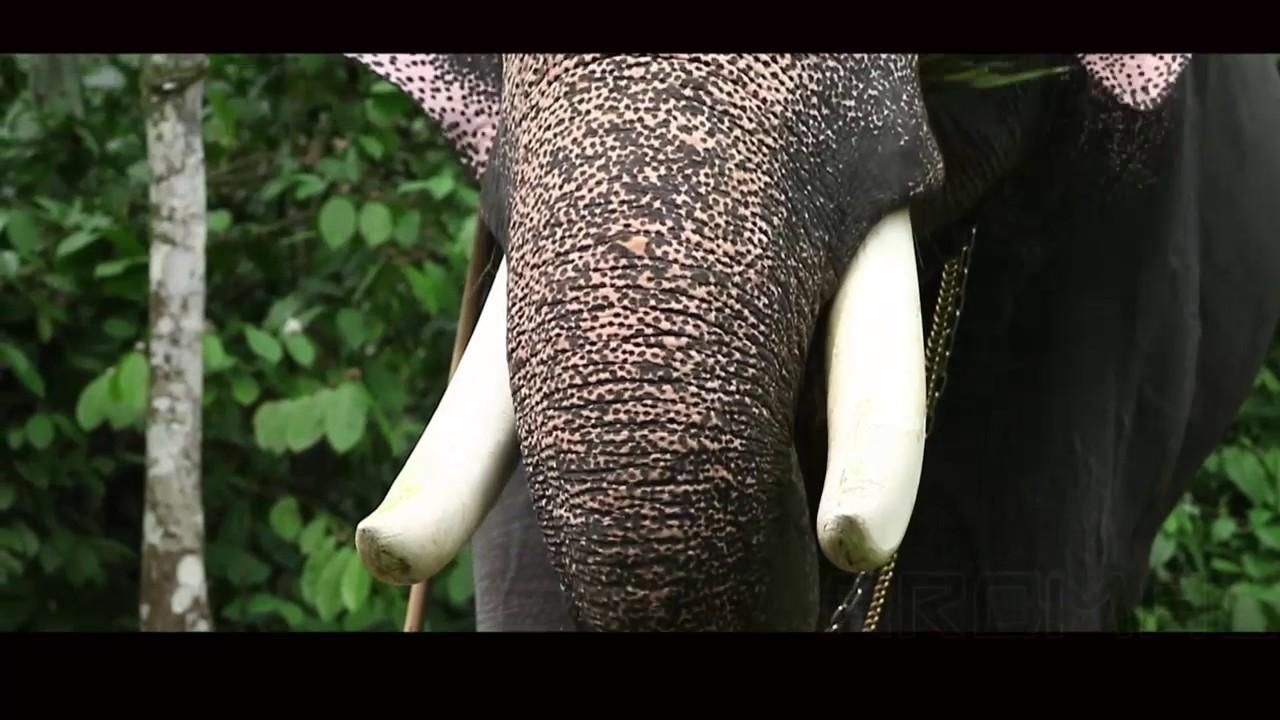 Elephants Height In Kerala