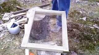 Building Our Rabbit Hutch Pt. 4