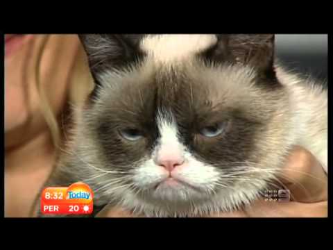 Karl Stefanovic Interviews Grumpy Cat on Today Show