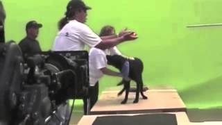 Making A Commercial In Las Vegas With 'tank' The Black Labrador Retriever