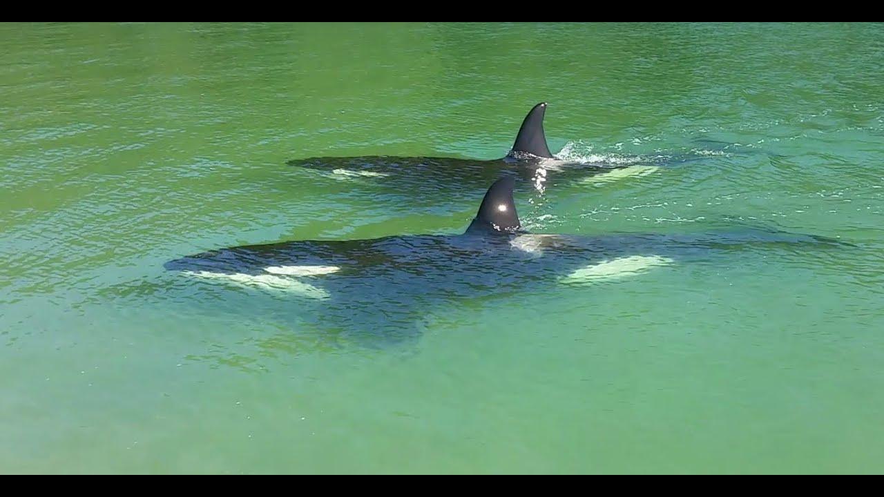 Whangamata Beach New Zealand | Nag Swimming ang mga