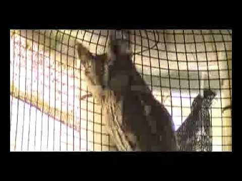 Walk on the Wild Side - Screech Owl Rehab
