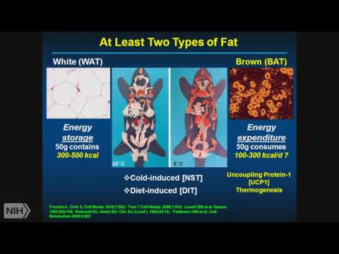 Demystifying Medicine 2017: Obesity: Brown and Other Fat