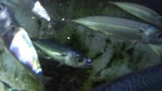 Going underwater in the bait tank aboard Ranger85