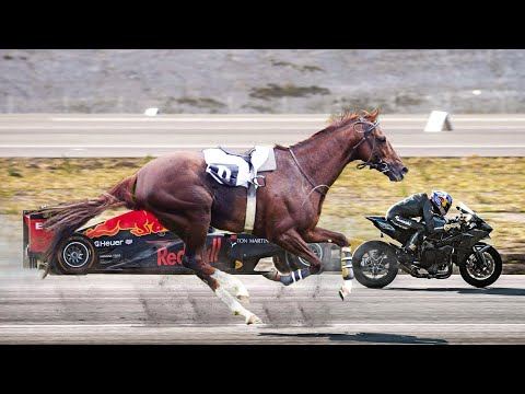 Top 10 Fastest Horse Breeds In The World