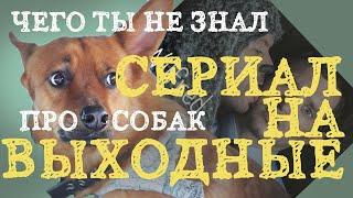 Что посмотреть, старый сериал про собак (факты о собаках)...