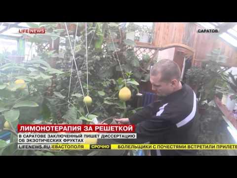 В Саратовской области осужденный выращивает гибрид лимона и грейпфрута