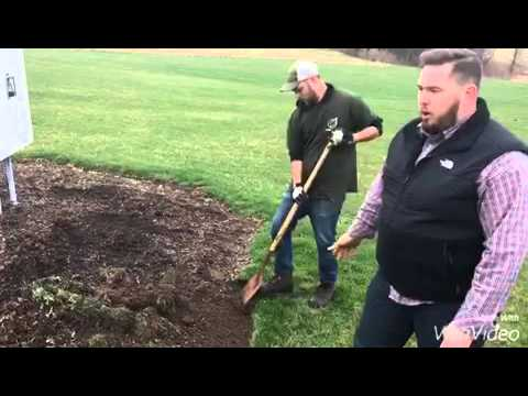 Lawn & Landscape tips - bed edging