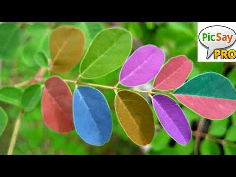 cara-membuat-daun-warna-warni-di-picsay-pro.