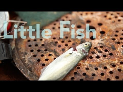 Little Fish: how eating smaller fish can improve the health of the oceans