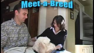 Teach That Dog!  Super Good Manners Dvd