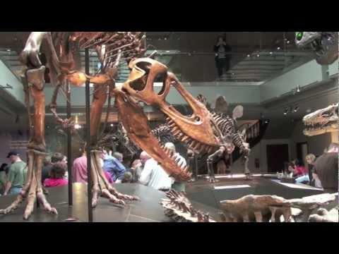 Natural History Museum Dinosaur Hall Tour