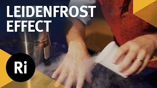 Liquid Nitrogen and the Leidenfrost Effect