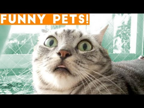 Ultimate Funny Pets of the Week March 2018 | FPV ft. Best Sleepy & Scared Animals, Funny Cats Sounds