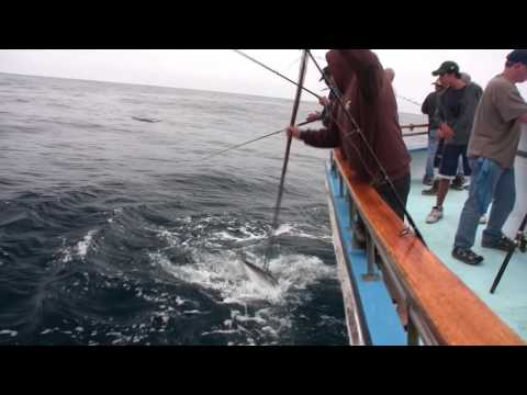Aggressor-Cortes Bank Yellowtail And Offshore YellowFin Tuna