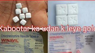 Kabootar ko udan k leye gole 9927484833