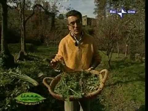 Erbe Officinali - Linea Verde